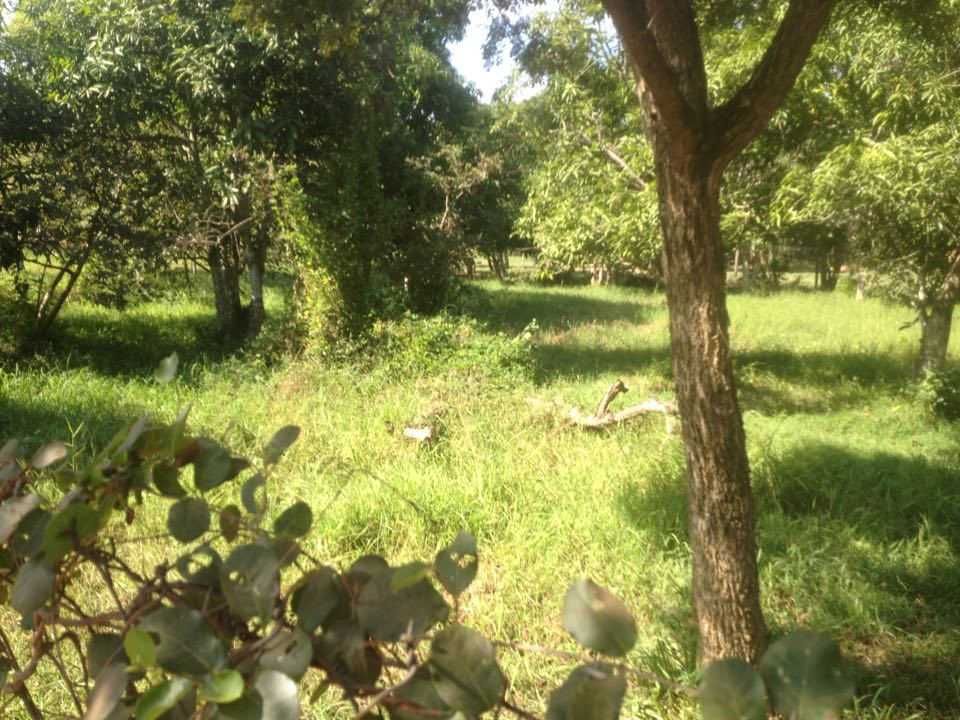 land for sale 1561m2 with trees