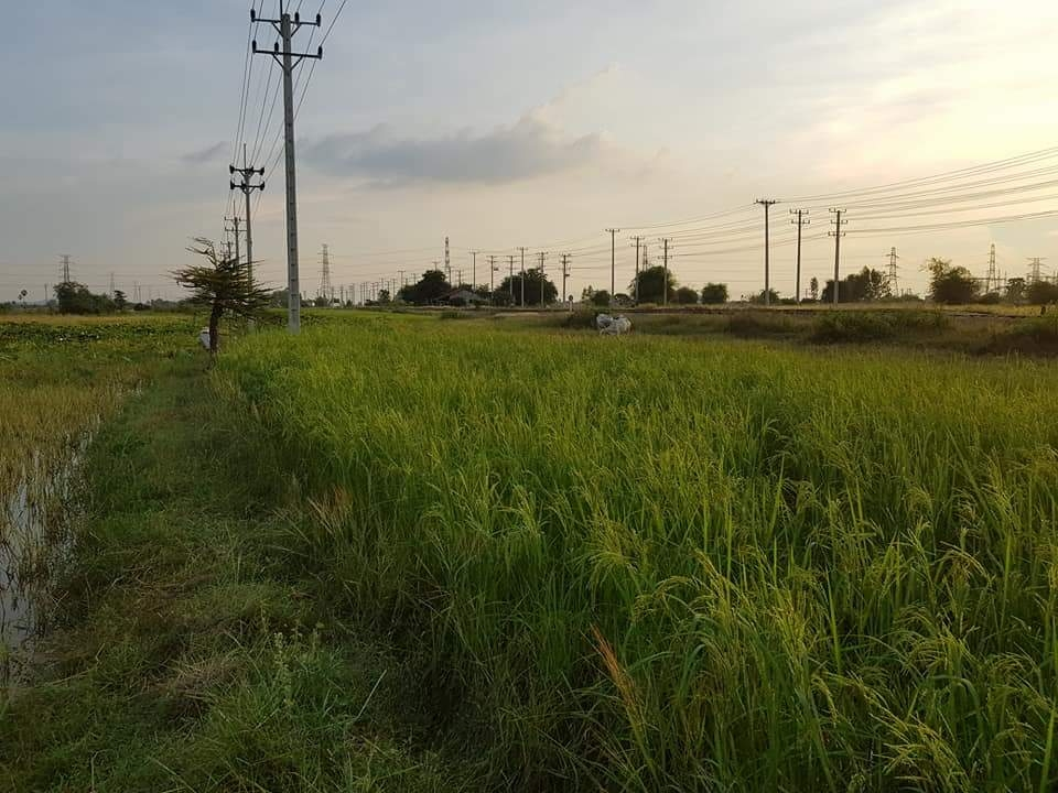 110m*70m land for sale in Kampong Speu